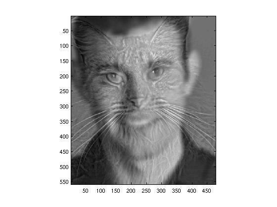 Hybrid Humans Cat Cat Human Hybrid